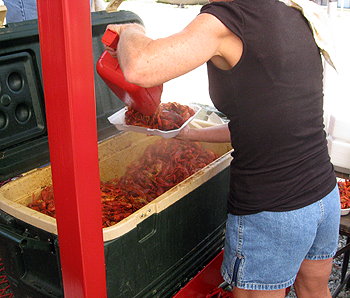 image of crawfish at The Texas Crawfish and Music Festival