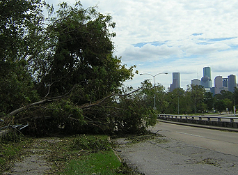 days after Hurricane Ike showing trees down on Allen pkwy