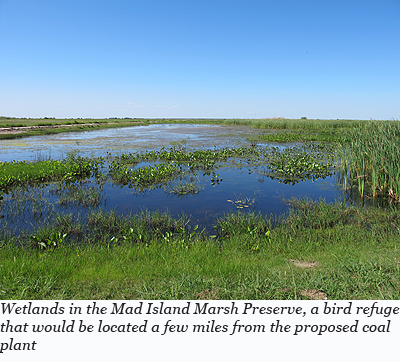 Wetlands in the Mad Island Marsh Preserve, a bird refuge that would be located a few miles from the proposed coal plant