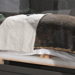The Houston Museum of Natural Science has welcomed the newest addition to the hall of ancient Egypt. It's a giant sarcophagus, or coffin that served as the final resting place for a priest.