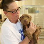 Pit bulls have a reputation for being vicious killers. But this Saturday being National Pit Bull Awareness Day, a local rescue shelter wants to take the opportunity to improve that reputation.