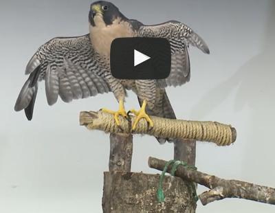 Video: Rehabilitating Injured Wildlife In Houston