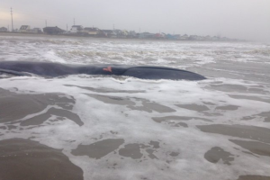 stranded whale photo