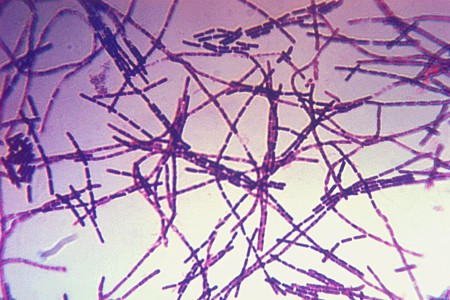 New Anthrax Treatment, Developed in Part by UT Researchers, Gets FDA Approval