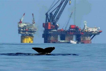 Whale fluke tail kicks up in front of oil platform