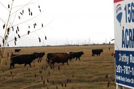 Grassland in West Harris County