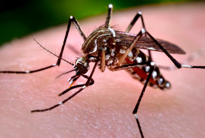 Are Companies Responsible If Their Employees Contract Zika On The Job?