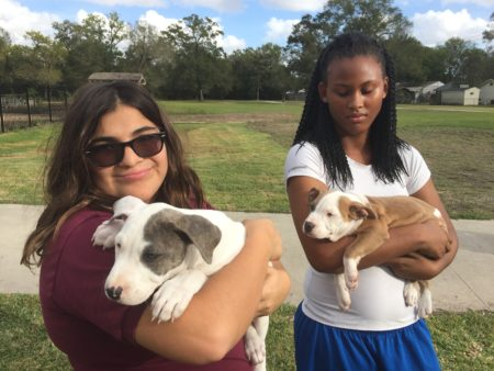 Students Grecia Yraheta and Treveyona Kennedy learn how to take care of 3-month old pitbulls in an elective at Furr High School.