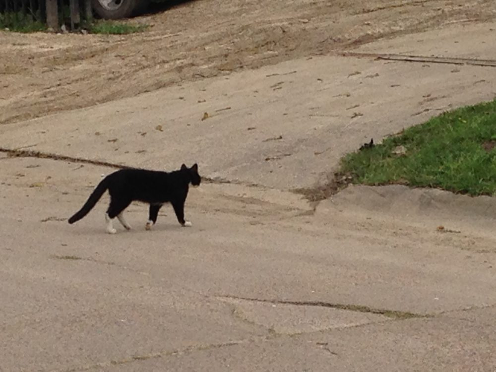 Some neighborhoods of the north are one of the sections of Pasadena where stray animals are more prevalent.